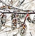 Cones-icicles. by Olga Vlasova