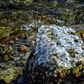 Conglomerate Ice by Rrrose Pix