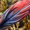 Congo African Grey Feather by Adrian DeLeon