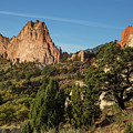Coniferous Trees In The Garden Of The Gods by Bridget Calip