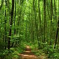 Connecticut Appalachian Trail Hiker by Raymond Salani III