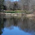Connecticut College Arboretum  by Virginia Levasseur