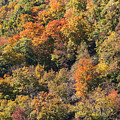 Connecticut Fall Color by Bob Phillips