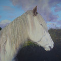 Connemara Pony by Eamon Doyle