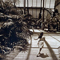 Conservatory, Barcelona 1976 by Michael Ziegler