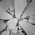 Conservatory Nature In Black And White 1 by Carol Groenen