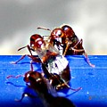 Consider The Ants 2 Of 3 by Cheryl A Beaudoin