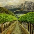 Constantia Uitsig Vines Pleine Aire by Damian Osborne