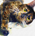 Contented Cat by Jane Schnetlage
