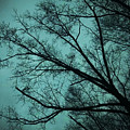 Contrasted Trees by Maggie Cersosimo