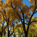 Contrasts Of Fall by Frank Madia