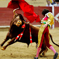 Contre Les Anti Corrida by Bruce Nutting
