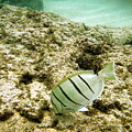 Convict Tang by Michael Peychich