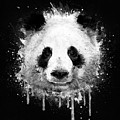 Cool Abstract Graffiti Watercolor Panda Portrait In Black And White  by Philipp Rietz