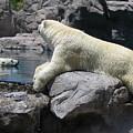 Cool Bears by Myrna Salaun
