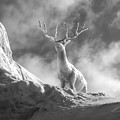 Cool Deer 2 by Bob Phillips
