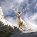 Cool Deer by Bob Phillips