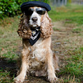 Cool Dog by Mats Silvan
