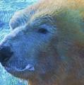 Cool Polar Bear by Dan Sproul