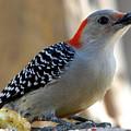 Cool, Woodpeckers Like Sunflower Seeds by Kala King