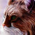 Maine Coon Cat by John Gabb