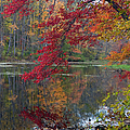 Cooper Mill Pond by Robert Pilkington