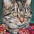 Cooper The Cat by Portraits By NC