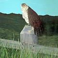 Copper Hawk by John Nickerson