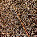 Copper Leaf by Jean OKeeffe Macro Abundance Art