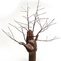 Copper Tree Hand A Sculpture By Adam Long by Adam Long