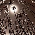Coppertone Palms by Sean Davey