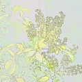 Coprosama Replens Pastel by Linda Brody