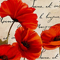 Coquelicots Rouge I by Mindy Sommers