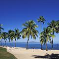 Coral Coast Palms by Bill Bachmann - Printscapes