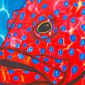 Coral Groupper II by Daniel Jean-Baptiste