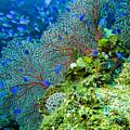 Coral In Truk by Dan Norton