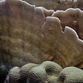 Coral On Dantchi Delight Reef Aruba by Bob Hahn