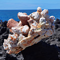 Coral Perched On Lava by Pamela Walton
