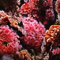 Coral Polyps by Michelle Williamson