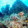 Coral Pyramid by Todd Hummel