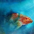 Coral Trout by Mario Carta
