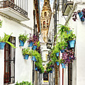 Cordoba Flower Street by Weston Westmoreland