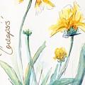 Coreopsis by CheyAnne Sexton