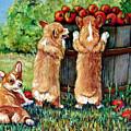 Corgi Apple Harvest Pembroke Welsh Corgi Puppies by Lyn Cook