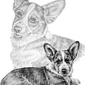 Corgi Dog Art Print by Kelli Swan
