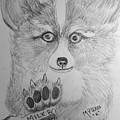 Corgi Pup by Maria Urso