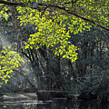 Corkscrew Swamp - In The Autumn by J Darrell Hutto