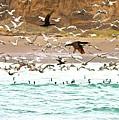 Cormorant Flight In Frenzy by Gus McCrea