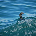 Cormorant In The Water by Blu Crane Arts