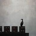 Cormorant  by Sally Banfill